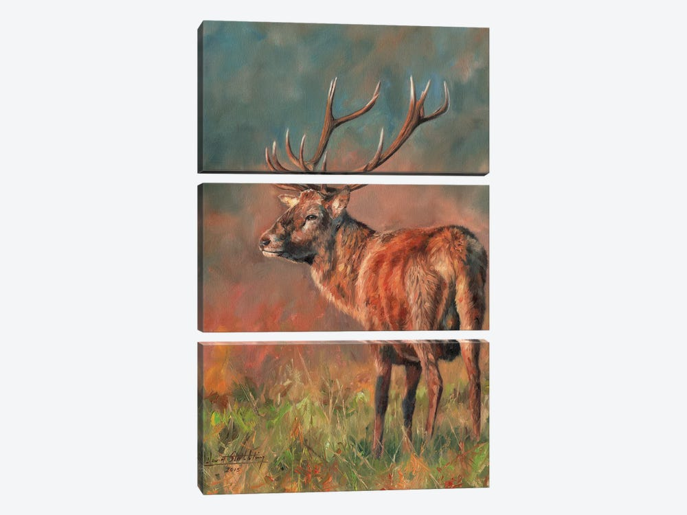 Red Deer Stag Evening Light by David Stribbling 3-piece Canvas Art Print