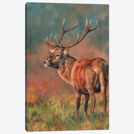 Red Deer Stag Evening Light 3-Piece Canvas #STG88} by David Stribbling Canvas Wall Art
