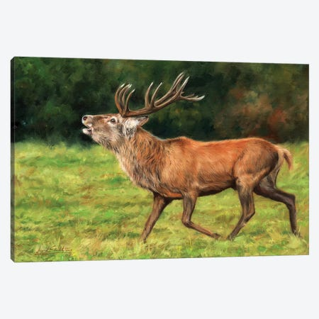 Red Deer Stag Running Canvas Print #STG89} by David Stribbling Canvas Wall Art