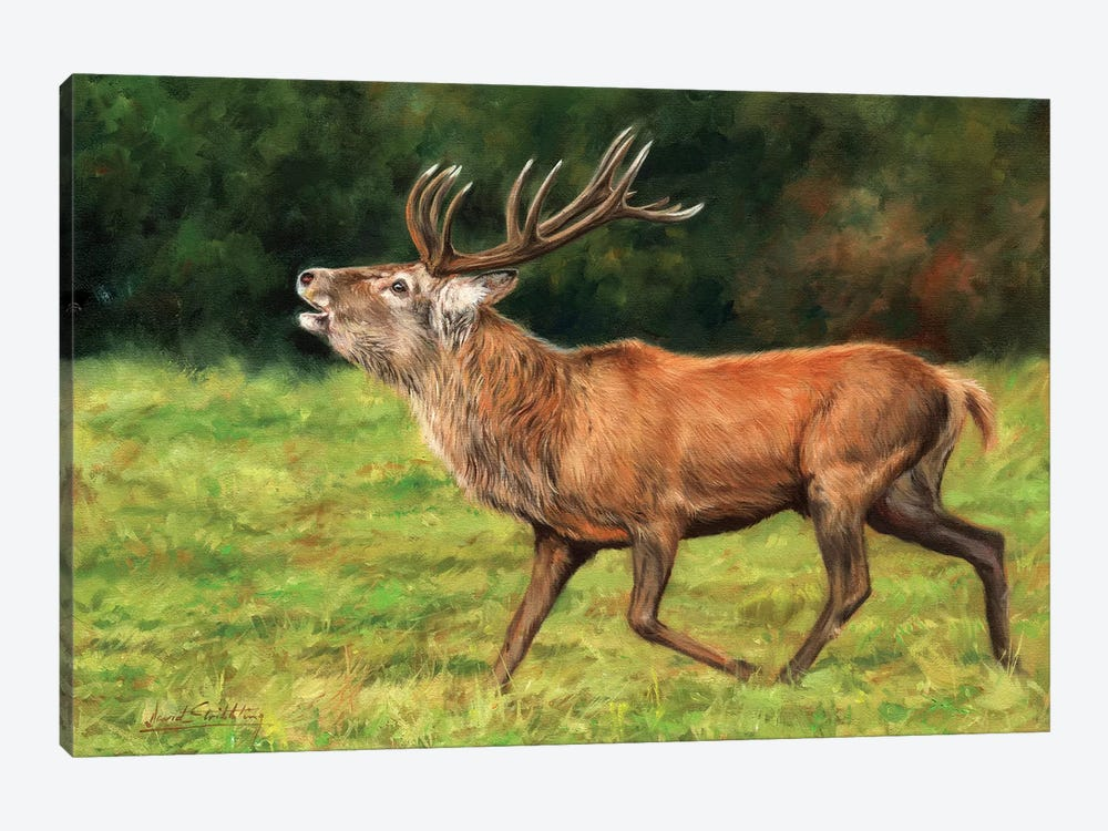 Red Deer Stag Running by David Stribbling 1-piece Canvas Wall Art
