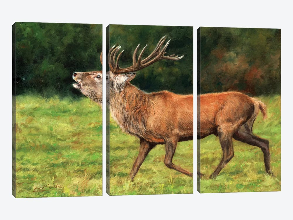 Red Deer Stag Running by David Stribbling 3-piece Canvas Art