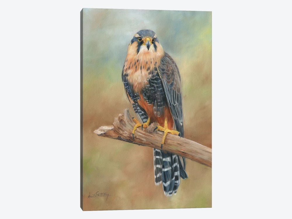 Aplomado Falcon 1-piece Canvas Wall Art