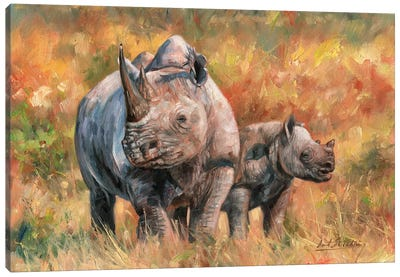 Rhino And Baby Canvas Art Print