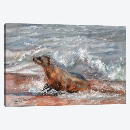 Sea Lion Canvas Print #STG91} by David Stribbling Art Print