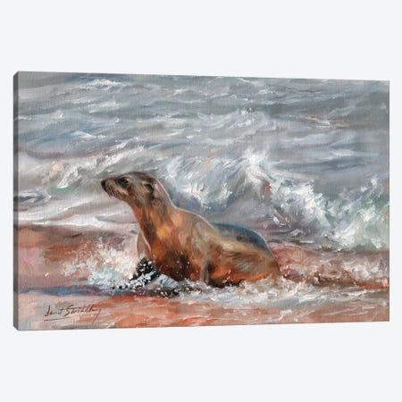 Sea Lion Canvas Print #STG91} by David Stribbling Art Print