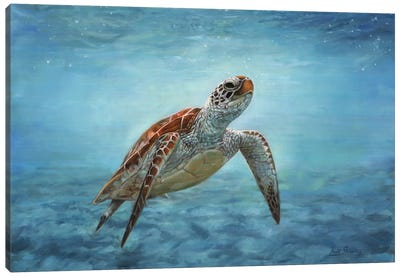 Sea Turtle by David Stribbling Canvas Art Print