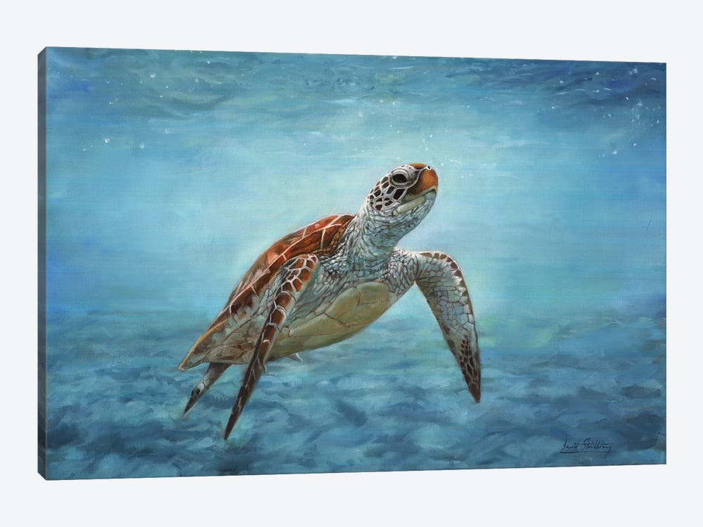 Sea Turtle by David Stribbling 1-piece Canvas Art