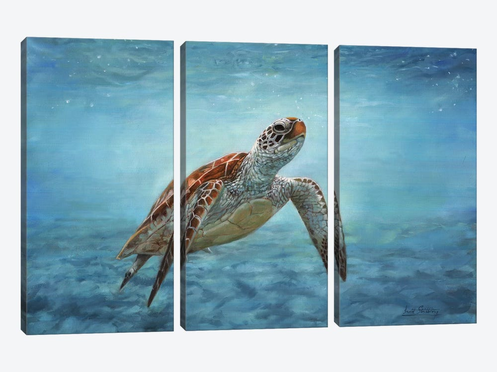 Sea Turtle by David Stribbling 3-piece Canvas Art