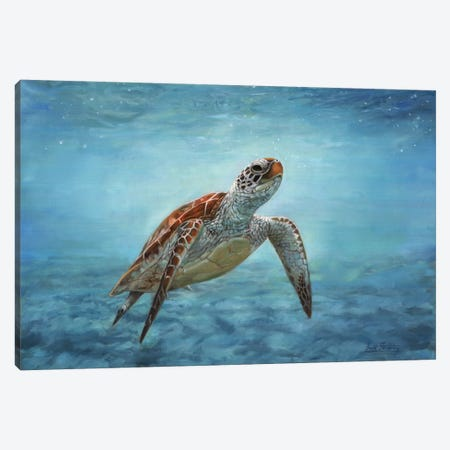 Sea Turtle 3-Piece Canvas #STG92} by David Stribbling Canvas Print