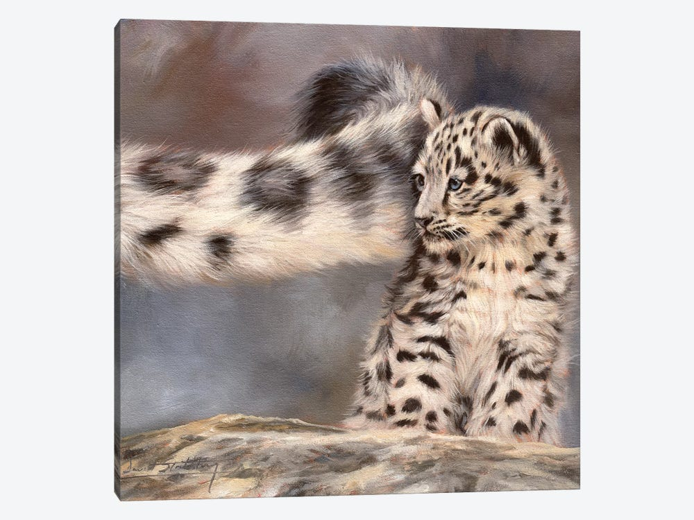 Side Swipe Snow Leopard Cub by David Stribbling 1-piece Canvas Print
