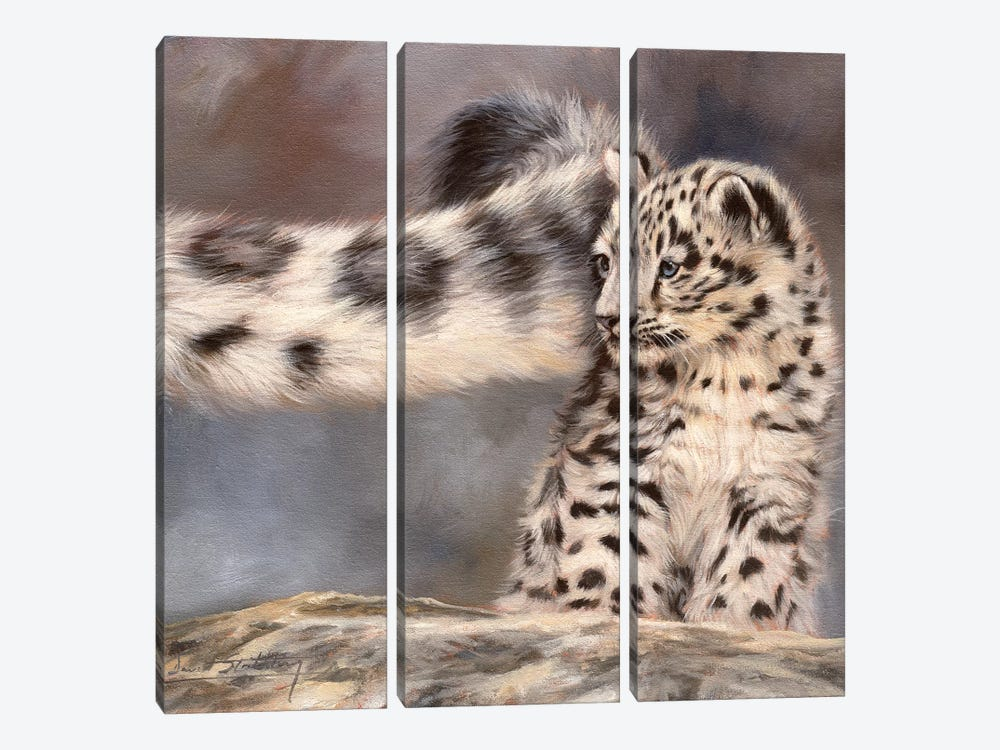 Side Swipe Snow Leopard Cub by David Stribbling 3-piece Canvas Art Print