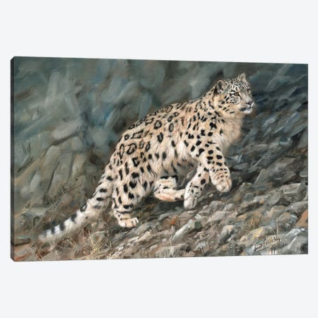 Snow Leopard Ascent Canvas Print #STG94} by David Stribbling Canvas Wall Art