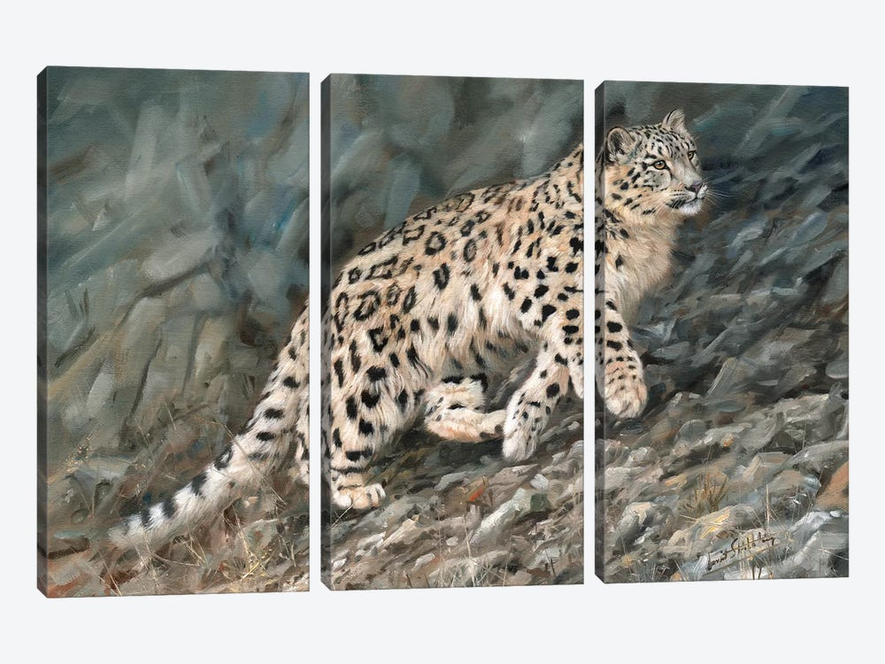 Snow Leopard Ascent by David Stribbling 3-piece Canvas Wall Art