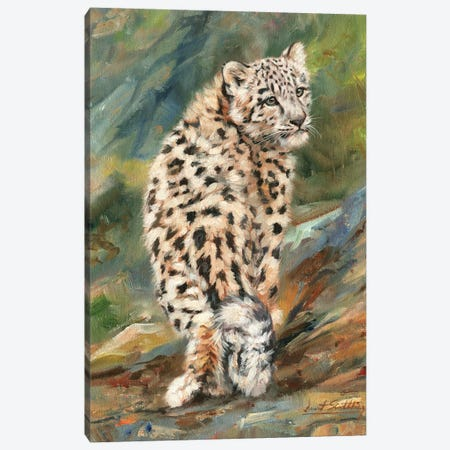 Snow Leopard Cub Looking Back 3-Piece Canvas #STG96} by David Stribbling Canvas Art