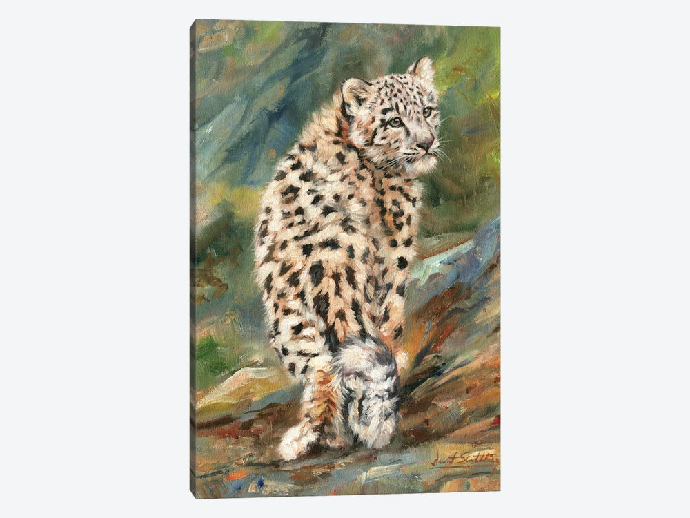Snow Leopard Cub Looking Back by David Stribbling 1-piece Canvas Art