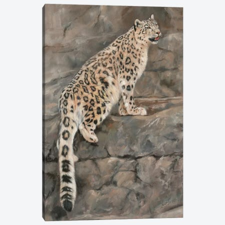 Snow Leopard I Canvas Print #STG97} by David Stribbling Canvas Art