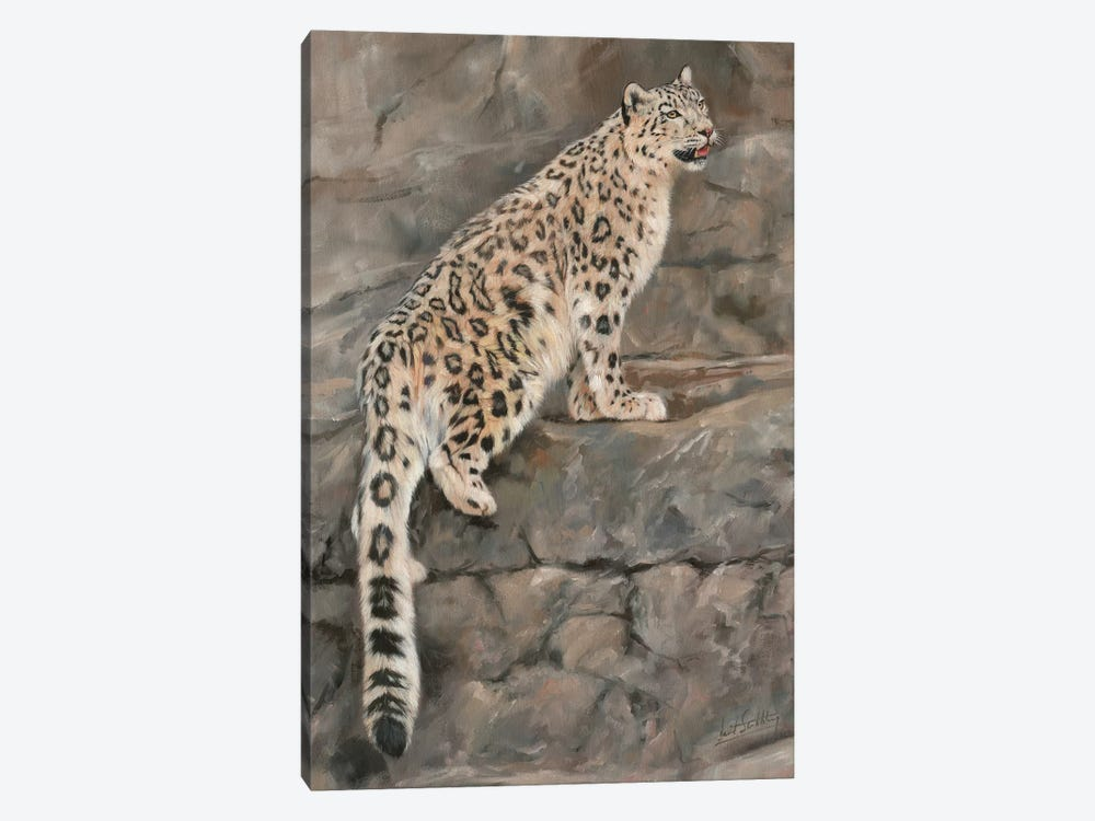 Snow Leopard I by David Stribbling 1-piece Canvas Art Print