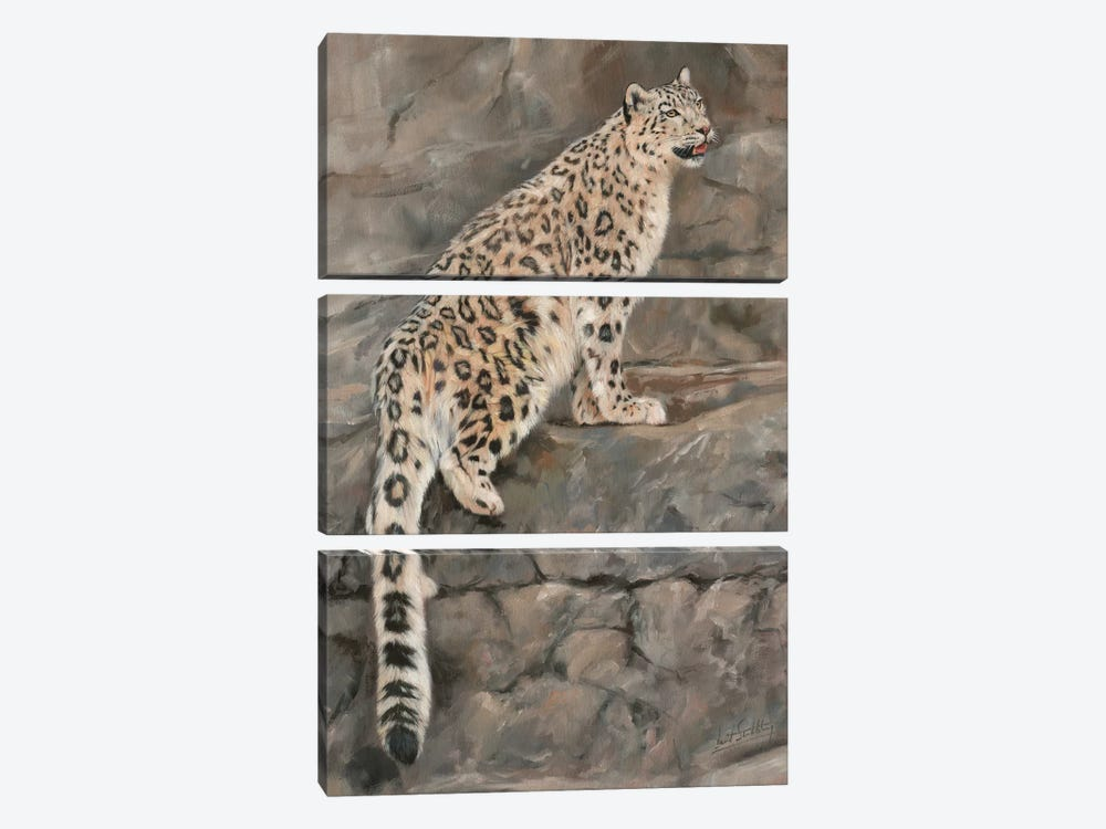 Snow Leopard I by David Stribbling 3-piece Canvas Print
