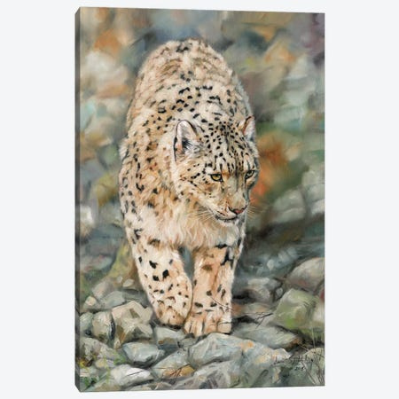 Snow Leopard II 3-Piece Canvas #STG98} by David Stribbling Canvas Print