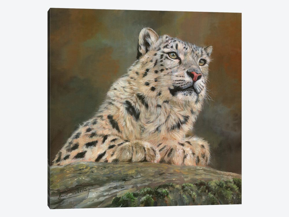 Snow Leopard On Rock by David Stribbling 1-piece Canvas Art Print
