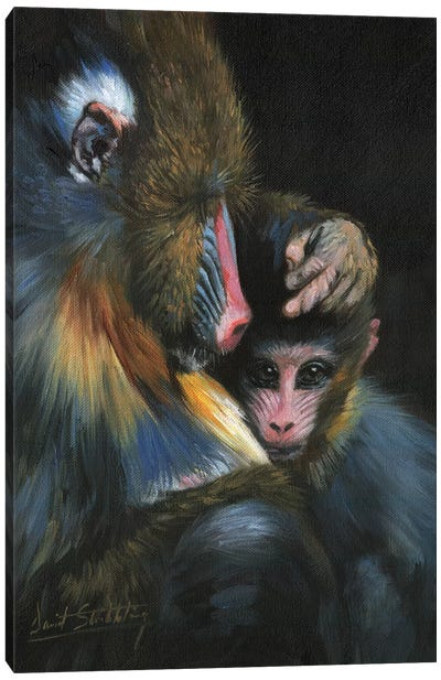 Baboon Mother And Baby Canvas Art Print