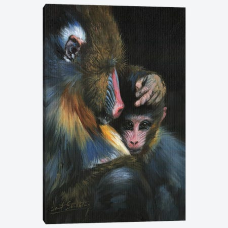 Baboon Mother And Baby 3-Piece Canvas #STG9} by David Stribbling Canvas Print