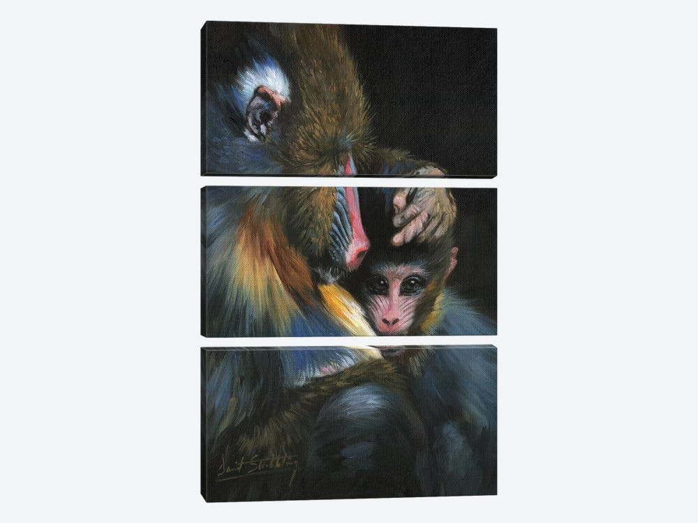 Baboon Mother And Baby by David Stribbling 3-piece Canvas Art Print