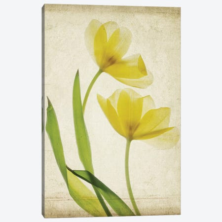 Parchment Flowers IV Canvas Print #STL10} by Judy Stalus Canvas Wall Art