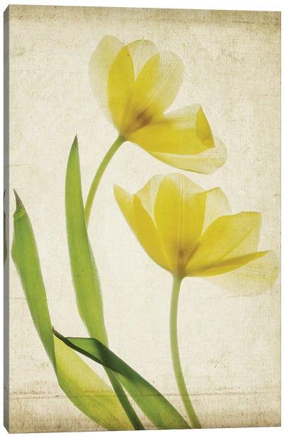 Parchment Flowers IV Canvas Art Print