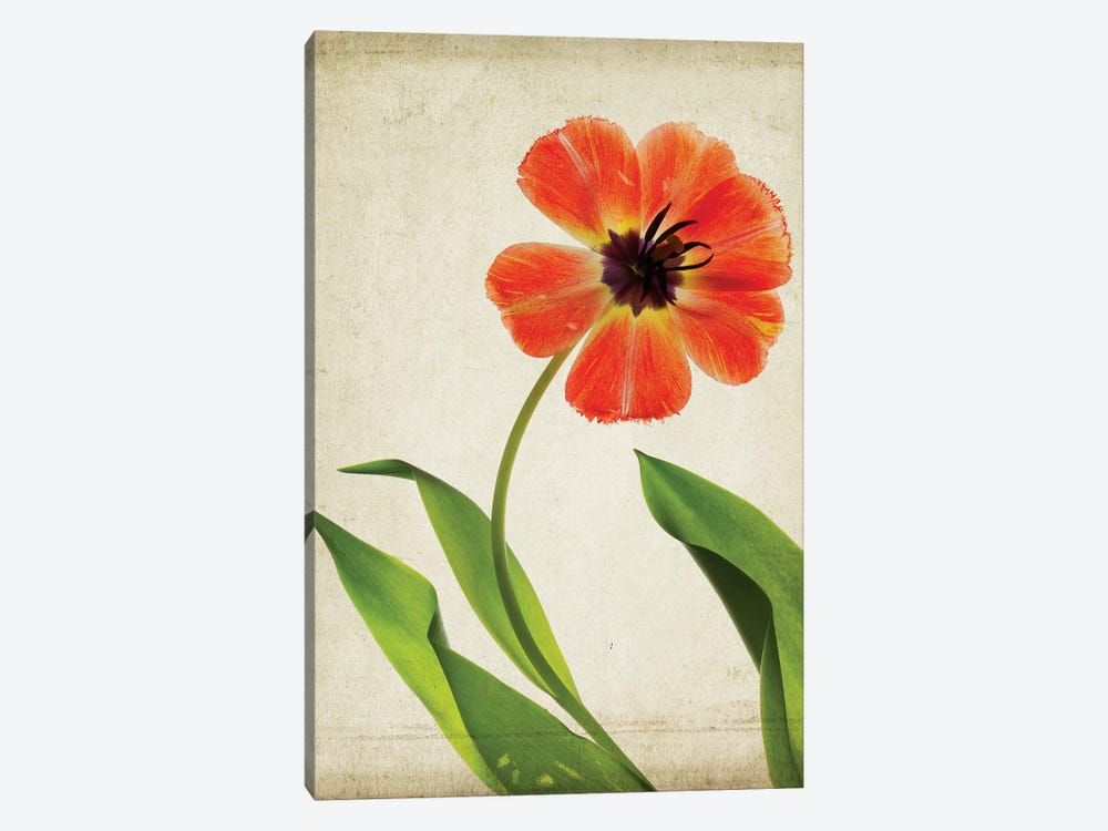 Parchment Flowers V by Judy Stalus 1-piece Canvas Wall Art
