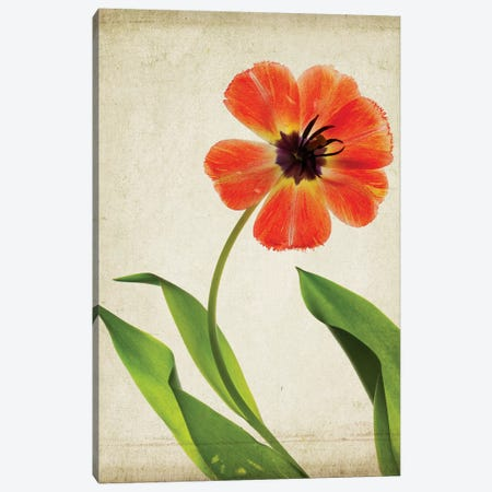 Parchment Flowers V Canvas Print #STL11} by Judy Stalus Canvas Artwork