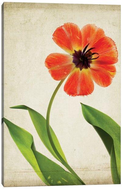 Parchment Flowers V Canvas Art Print