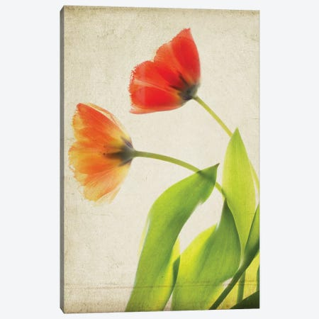 Parchment Flowers VI Canvas Print #STL12} by Judy Stalus Canvas Art