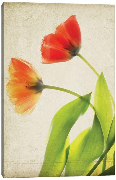 Parchment Flowers VI Canvas Art Print