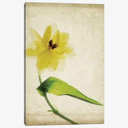 Parchment Flowers VII Canvas Print #STL13} by Judy Stalus Canvas Wall Art