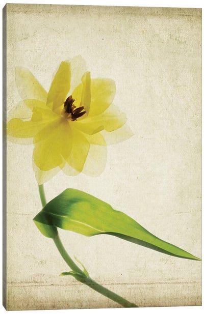 Parchment Flowers VII Canvas Art Print