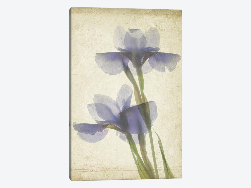 Parchment Flowers VIII by Judy Stalus 1-piece Canvas Art Print