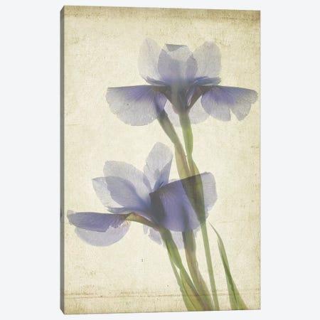 Parchment Flowers VIII Canvas Print #STL14} by Judy Stalus Canvas Print