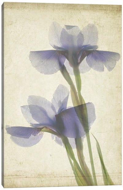 Parchment Flowers VIII Canvas Art Print