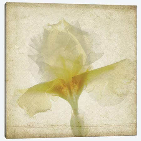 Parchment Flowers IX Canvas Print #STL15} by Judy Stalus Canvas Print