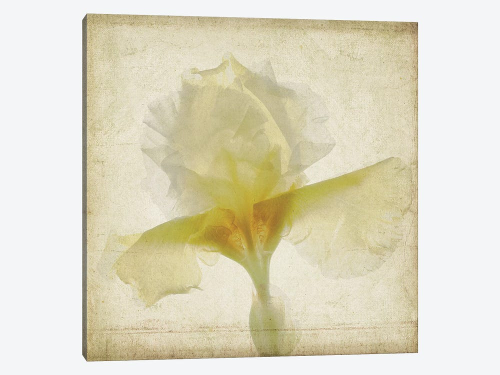 Parchment Flowers IX by Judy Stalus 1-piece Canvas Wall Art
