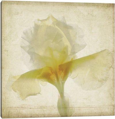 Parchment Flowers IX Canvas Art Print