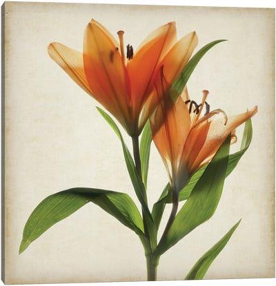 Parchment Flowers X Canvas Art Print