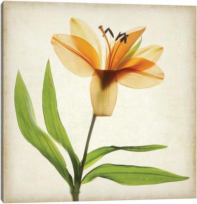 Parchment Flowers XI Canvas Art Print
