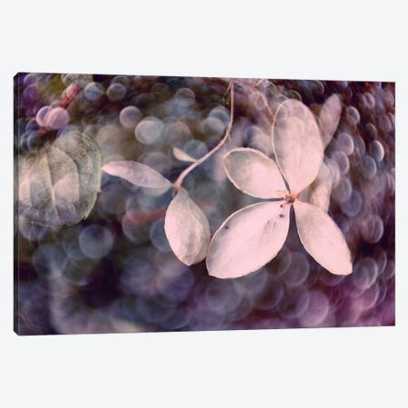 Purple Hydrangea Canvas Print #STL18} by Judy Stalus Canvas Wall Art