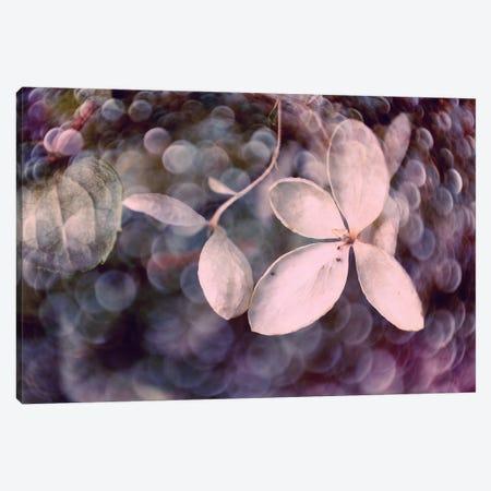 Purple Hydrangea Canvas Print #STL18} by Judy Stalus Canvas Wall Art