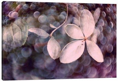 Purple Hydrangea Canvas Art Print