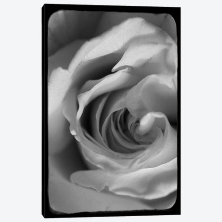 Rose Spiral I Canvas Print #STL19} by Judy Stalus Canvas Artwork