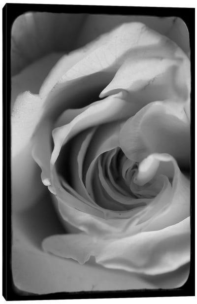 Rose Spiral I Canvas Art Print