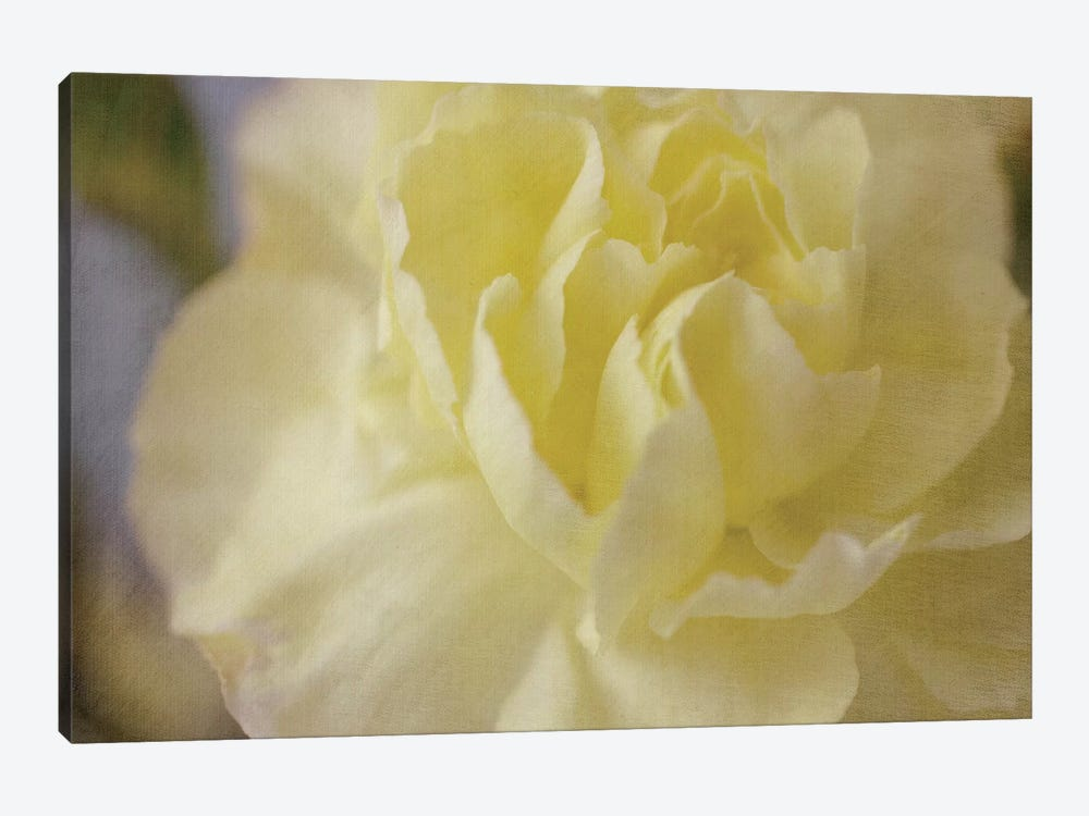 Rose Whisper I by Judy Stalus 1-piece Art Print